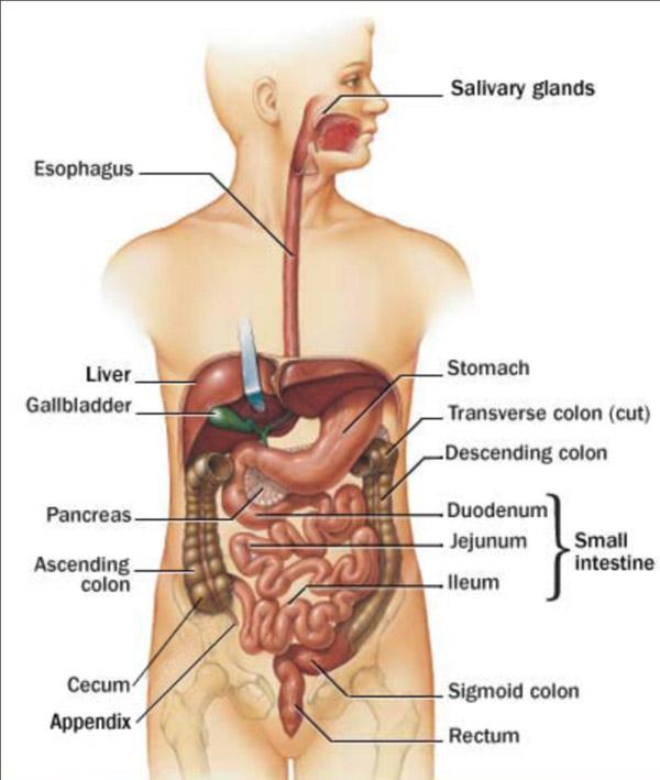 Research Paper Appendix Essaycapitalcom Part 287